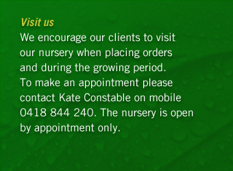 We encourage our clients to visit our nursery when placing orders and during the growing period. To make an appointment please contact Kate Constable on mobile: 0418 844 240. The nursery is open by appointment only.